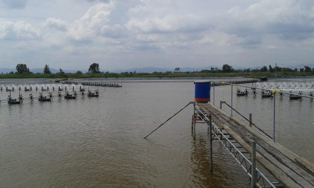 غذاده-خودکار-پرورش-ماهی