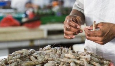 تولید میگو در هند
