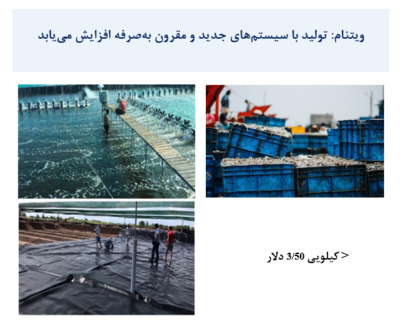 تولید ماهی با سیستم های جدید و مقرون به صرفه