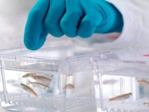 زیست فناوری در آبزی پروری