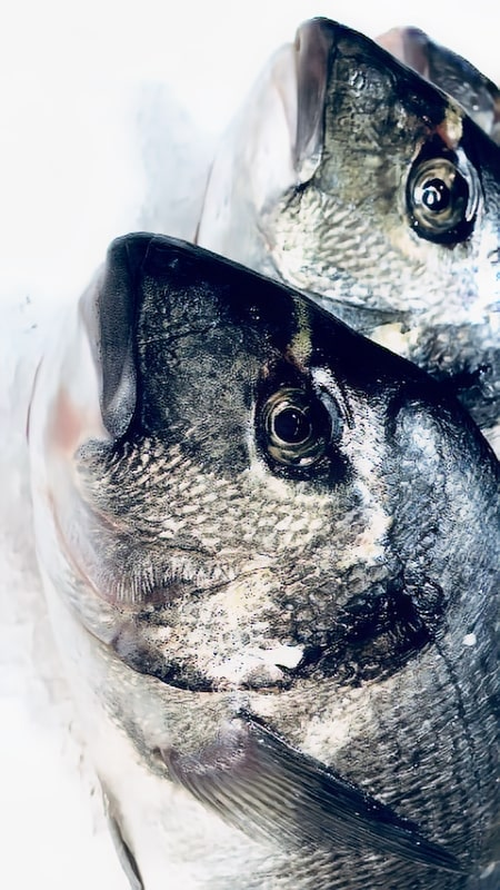 ماهیان-دریایی-محصولات-بتا