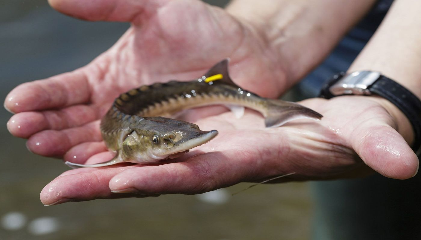 BTA-slider-Fish