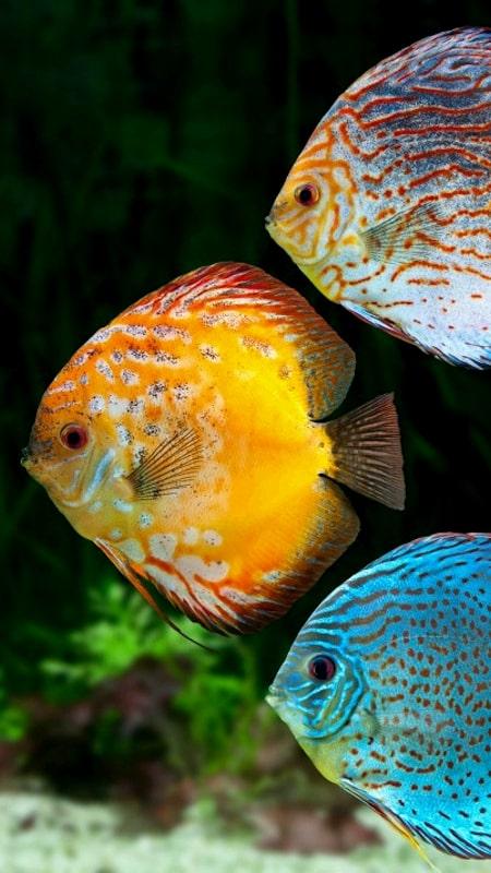ماهیان-زینتی-محصولات-بتا