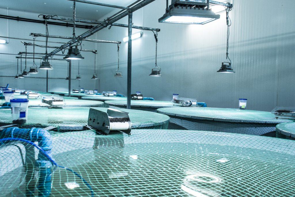 غذاده-خودکار-پرورش ماهی
