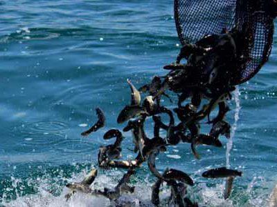 پرورش-ماهی-ارمنستان