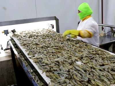 کاهش واردات میگو چین