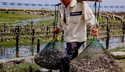 آبزی-پروری-چین-چالش