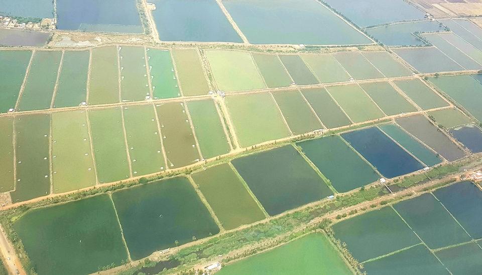هند-تولیدکننده-بزرگ-میگو