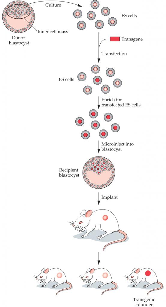 ماهیان-ترنس-ژن