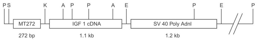 ماهیان-ترانس-ژن