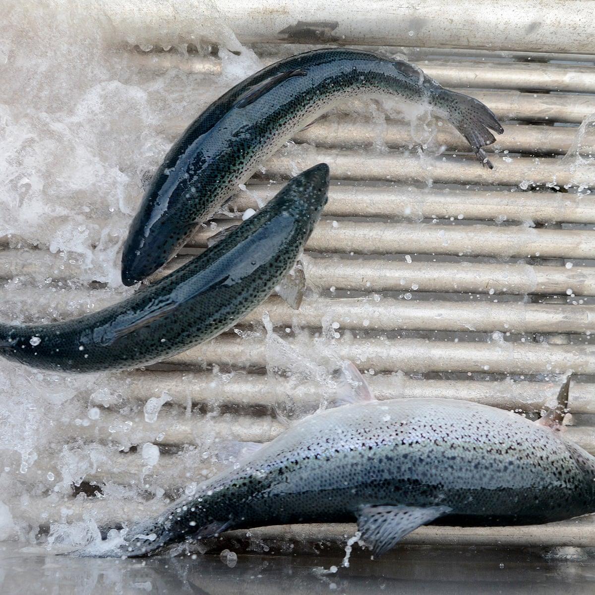 تولید ماهی لهستان