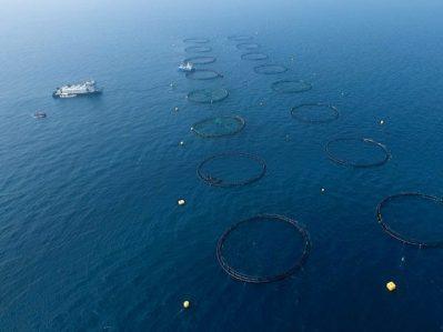 پرورش ماهی در قفس قطر