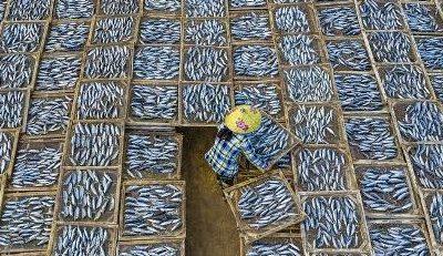 ماهی-گوشت-سلولی