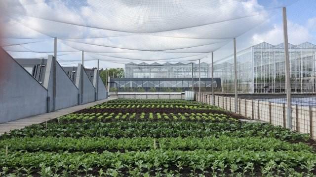 مزرعه-شهری-بلژیک